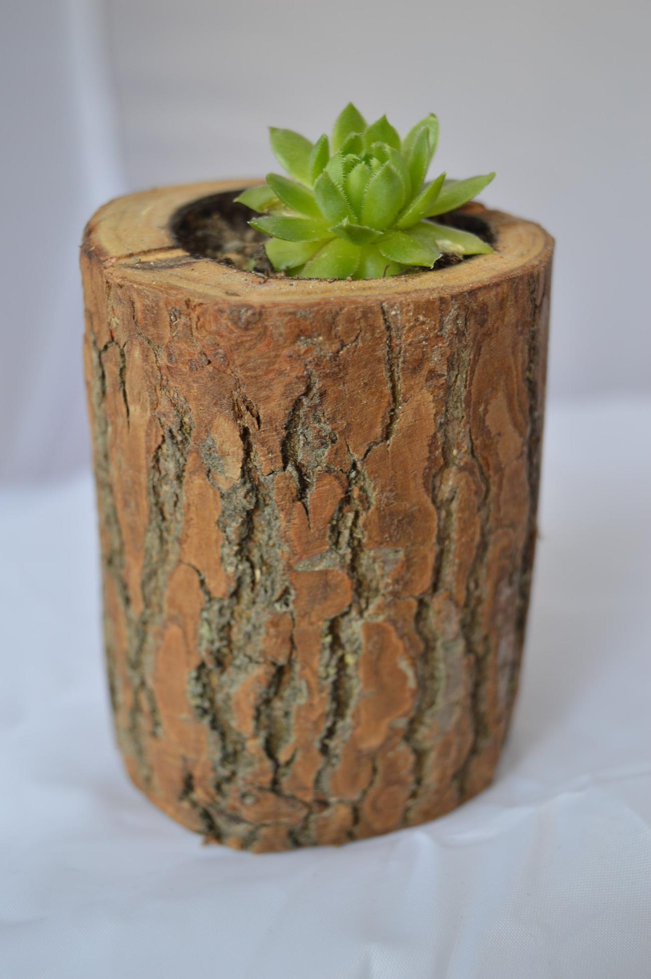 Roślina Ozdobna W Pniu Drzewa
